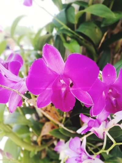 Flower Pink Color Nature Plant Petal Beauty In Nature Fragility No People Day Outdoors Orchid Flower Head Close-up Freshness