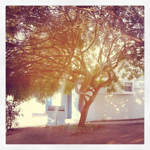 Ucncoquimbo UCN árbol Universidad Coquimbo Chile instachile