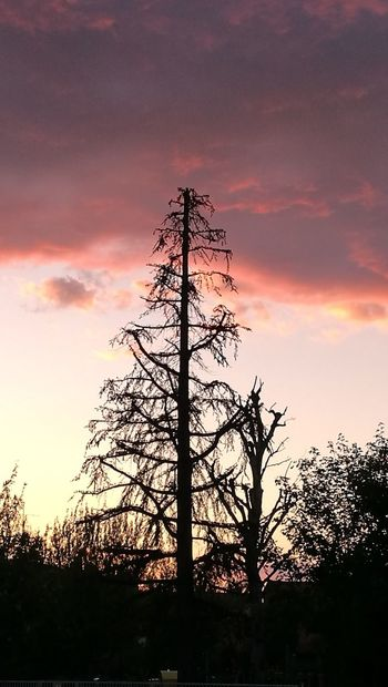 Silhouette Tree Sunset Sky Tranquility Outdoors Beauty In Nature Nature Cloud - Sky Sunset Silhouettes Emotions