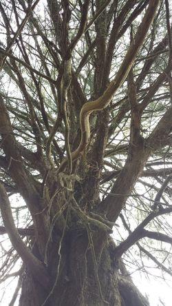 The Purist (no Edit, No Filter) Nature Natural Beautiful Enjoying Nature Enjoying Life Tree Cedar Tree