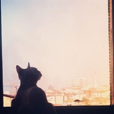 Instacat Cats Cat Catlover Ilovemycat Photooftheday Picoftheday Cute Bestoftheday Igers Catoftheday Istanbul Romantic