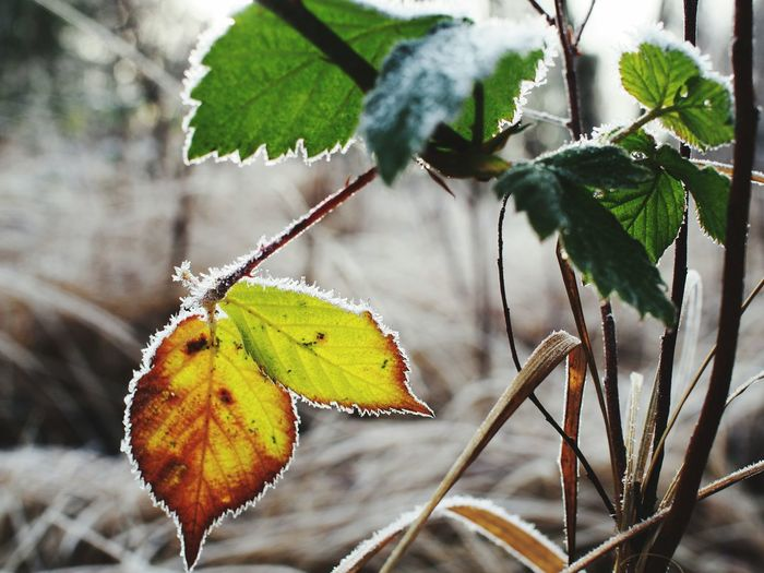 Winter on my mind Winter Beauty  Frost Open Your Eyes Colours Of Nature EyeEm Nature Lover Nature_collection
