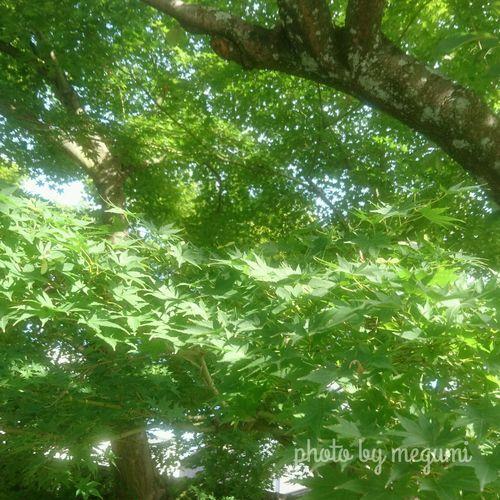 緑から赤に染まるの Tree Nature Low Angle View Day Green Color Growth Outdoors No People Forest Beauty In Nature Freshness Sky