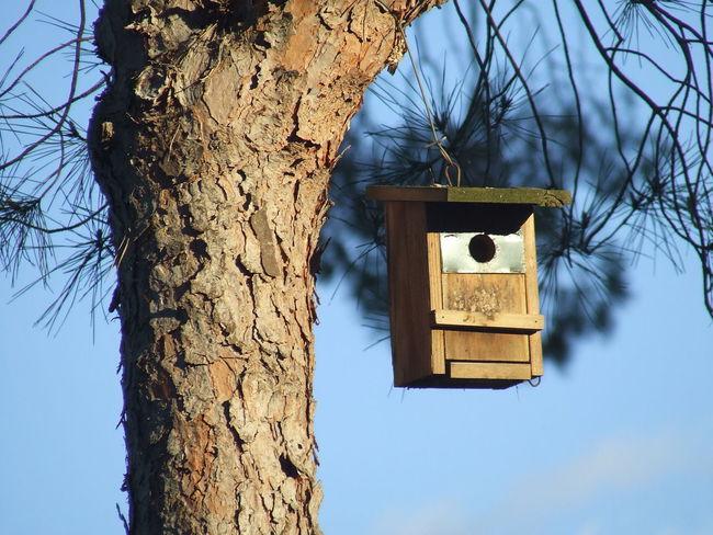Bird House Blue Sky Branch Cortex Cortex Tree Crust Doñana La Algaida Pinar De La Colonia Monte Algaida Pine Tree Pinewood Rind Tree Tree Trunk Wood Wood Work
