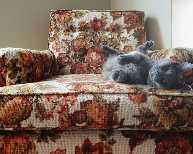 Indoors  Home Interior Old-fashioned Pets Domestic Animals Close-up Animal Themes Vintage Floral Pattern Chair Cat No People Day Mammal