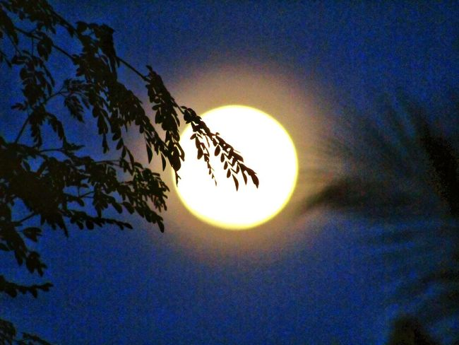 fullmoon Sun Sky Low Angle View Outdoors Sunset Nature Astronomy No People Blue Moon Tree Beauty In Nature EyeEm Ready