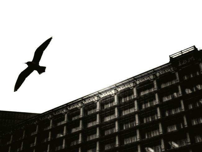 Fly Like A Bird Bird Photography Freedom Free Nature Shadow Architecture Perspective Showcase: January Bird Traveling Flying The Still Life Photographer - 2018 EyeEm Awards The Street Photographer - 2018 EyeEm Awards