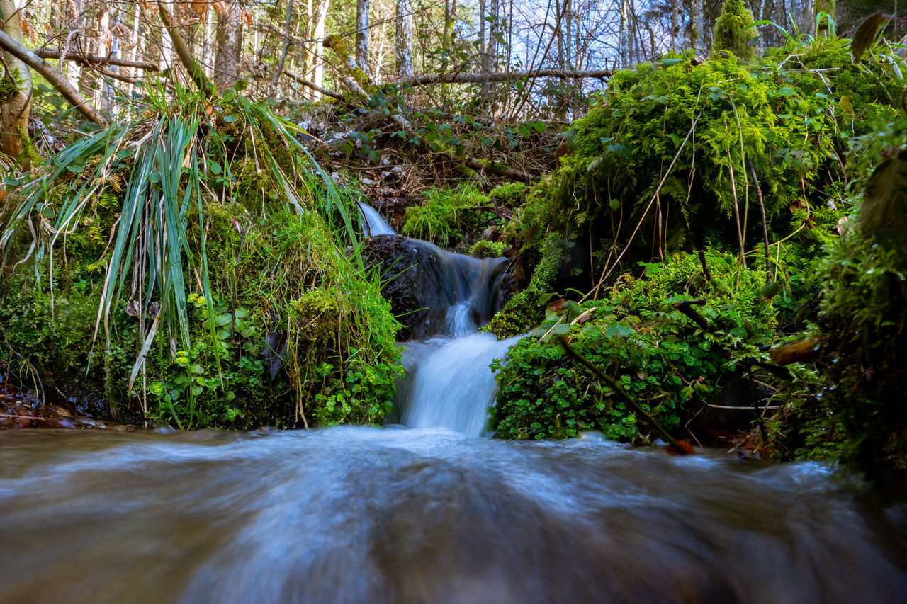 plant, tree, water, motion, forest, flowing water, beauty in nature, waterfall, scenics - nature, blurred motion, long exposure, land, nature, flowing, no people, solid, rock, growth, river, rainforest, outdoors, stream - flowing water, power in nature, falling water