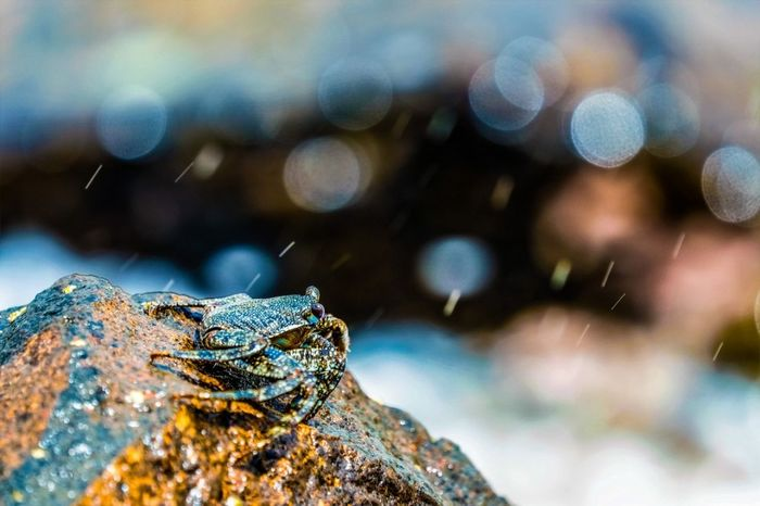 Animal Wildlife No People One Animal Nature Animals In The Wild Close-up Day Outdoors Animal Themes Water UnderSea Power In Nature Nature Beauty In Nature Crab On The Beach Crab Crabs Bokehlicious Bokeh Bokeh Balls Bokeh Background Crustacean Sea_collection Sea Life Seaside