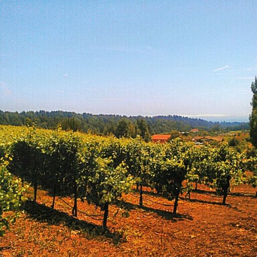 Winery Vino Wine Designateddriverlife cupofwaterinawineglassplease soquel