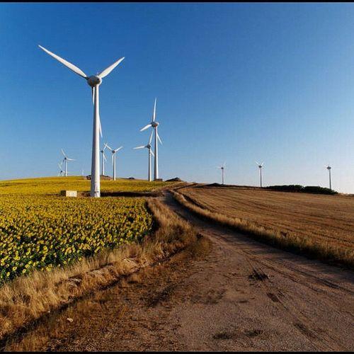 Wind farm sunflower #43 #olympus #getolympus #e5 #apulia #italy #instapulia #power #energy #landscape #dxo Landscape Italy Olympus Power Energy 43 Apúlia E5 Getolympus Dxo Instapulia