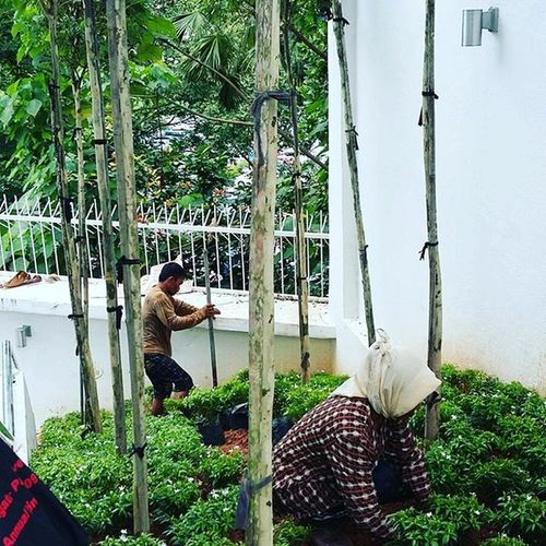 On going my freelance landscape project Project Landscape LandscapeArchitecture Landscapeproject Trees Shrubs Treeatslope Dervishstudio Sideproject