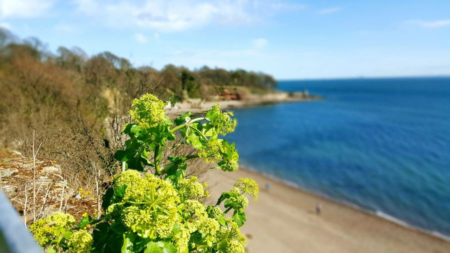 Ravenscraig Park, Kirkcaldy Growth Plant Nature Tree Water Beauty In Nature Scenics Tranquility Sky Outdoors Grass Day Close-up Mobile Photography Samsung Galaxy S6 Edge Mobile Phone Photography Fife Coastal Path Kirkcaldy Fife Scotland Cliff Edge Beach Beach Photography Green Blue River The Great Outdoors - 2017 EyeEm Awards EyeEmNewHere