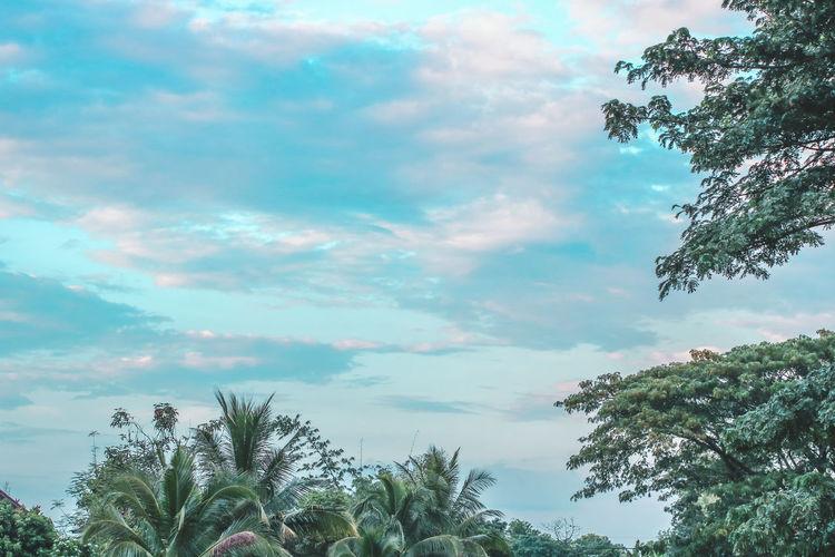 Shine. Sky And Clouds Skylovers Bird Tree Tree Area Sky Cloud - Sky