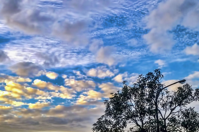 Beauty In Nature Cloud - Sky Day Low Angle View Nature No People Outdoors Scenics Sky Tranquility Tree