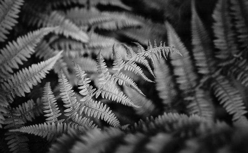 Full frame shot of leaves during winter