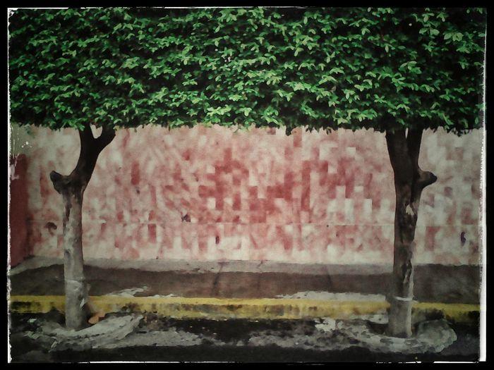 La portería Auto Post Production Filter Growth Single Tree Green Color No People Mexico