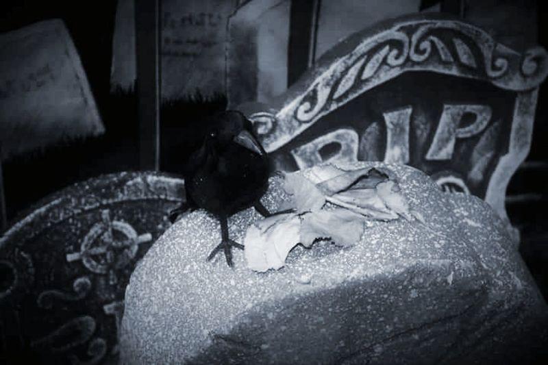 Night Close-up No People Spooky Graveyard Spooky Bird gravestones halloween pics