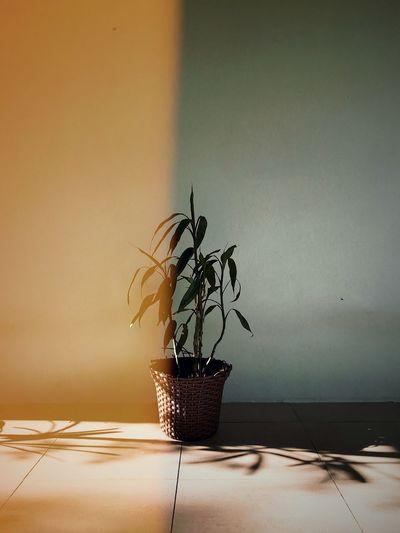 Plant - yellow