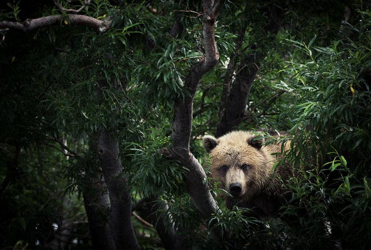Bear amidst trees