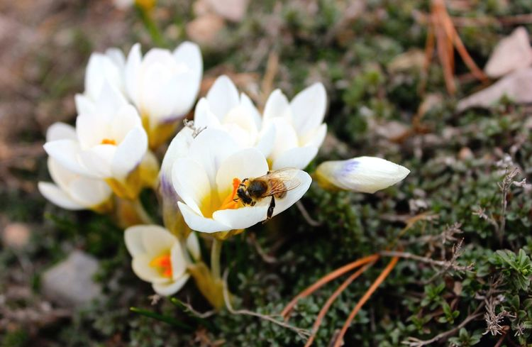 Better Together Bee Flowers White Pollenation Pollen Garden Flowers,Plants & Garden EyeEm Nature Lover