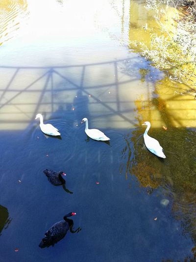 EyeEmNewHere EyeEm Best Shots EyeEm Selects EyeEm Nature Lover Water Flamingo Swan Close-up