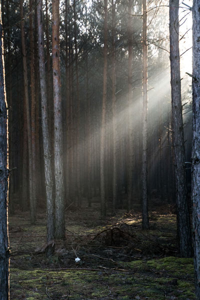 Ray Rays Of Light Trees Beauty In Nature Day Forrest Nature No People Outdoors Tree