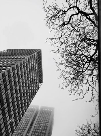 Foggy Skyscraper Growth Architecture City Modern Development Bare Tree No People Building Exterior Tall Clear Sky Tree Outdoors Sky High Day