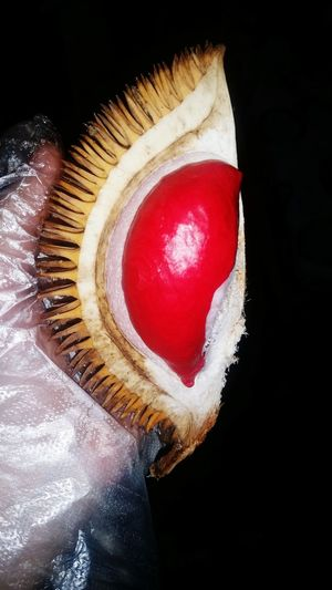 Durianmerah Alau Sabah Borneo Malaysia SabahanFood Durian Reddurian Red Tropical Fruits Rareitem Durianseasons Durian Fiesta EyeEm Best Shots - Nature Eye4photography  Coloroflife Colour Of Life Colour EyeEmNewHere