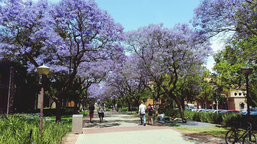 The scenery on campus today Springtime South Africa Lavenderlove