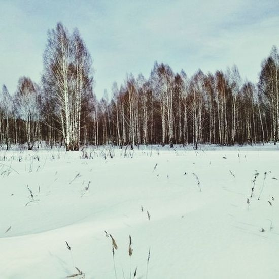 It's Russian nature First Eyeem Photo