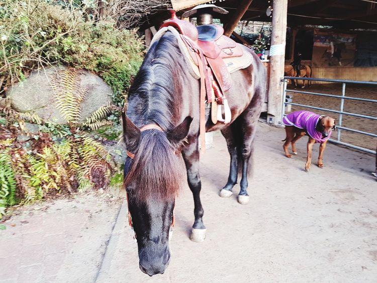 Horse Life Morgan Horse Horses Horse Life Dogs EyeEm Selects Pets Horseback Riding Horse Livestock Working Animal Stable