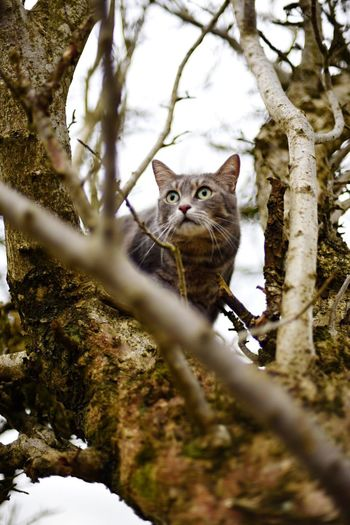 Portrait of cat in tree