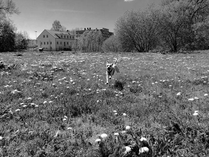 Blackandwhite Black & White Unforgettable ♥ Unforgettable Moment Hund Dog Mountain Tree Astronomy Sky Landscape
