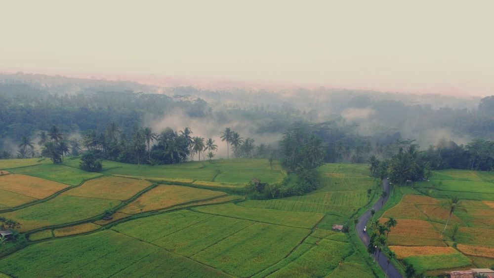 The Portraitist - 2017 EyeEm Awards Agriculture Field Rural Scene Farm Landscape Beauty In Nature Crop  Nature Growth Tree Irrigation Equipment Outdoors No People Day Scenics Fog Terraced Field Tea Crop Rice Paddy Freshness