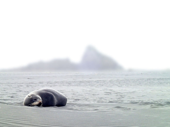 Seal relaxing on beach against sky