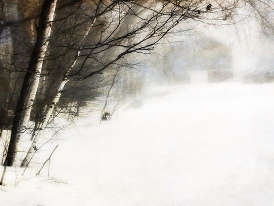 Maine winter Barn In Snow Maine Winter Cold Temperature Snow Nature Weather Bare Tree Beauty In Nature