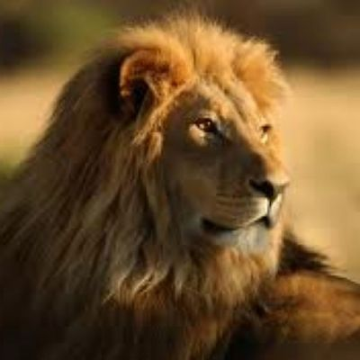 Did You Think The Lion Was Sleeping Because He Didnt Roar? -Friedrich Schiller