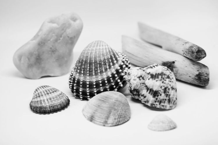 Seashell French Food No People Nature Close-up Indoors  Darkness And Light White Background Nature Studio Shot Beauty In Nature Sea Life Shell Photography Shells Beach Animal Shell Black And White Photography Black And White Blackandwhite Sommergefühle EyeEm Selects Be. Ready. Black And White Friday