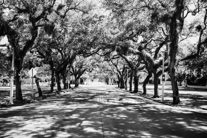Empty road along trees