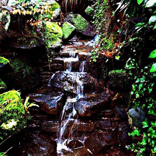 Waterfall Nature Fortheloveofgreen