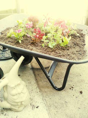 Gardening Gnome Gardening Flowers,Plants & Garden Beautiful Nature nature