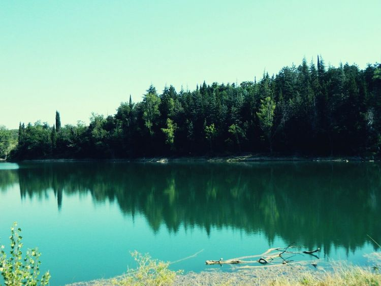 Tree Reflection Water Lake Sky Nature No People Tranquility Outdoors Clear Sky Scenics Beauty In Nature Day
