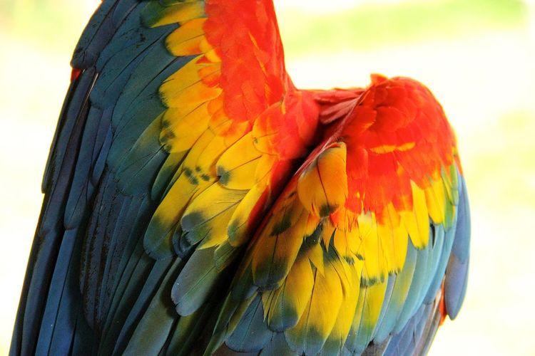 Beauty In Nature Close-up Colorful Focus On Foreground Macaw Multi Colored Nature No People Orange Color Outdoors Yellow First Eyeem Photo