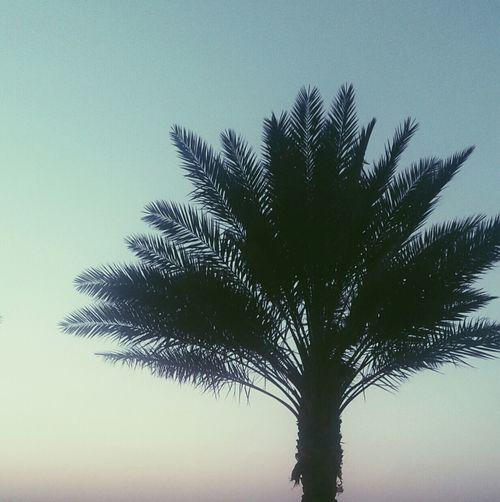 صباح الخير :| رجعت لكم بعد فتره طويله :* المهم اللي عندوه مدح او سب او سؤال او اي شيء يبي يقولوه لا يستحي ويقولوه لي > مروقه ;! Hail City || مدينة حايل Hail, Saudi Arabia