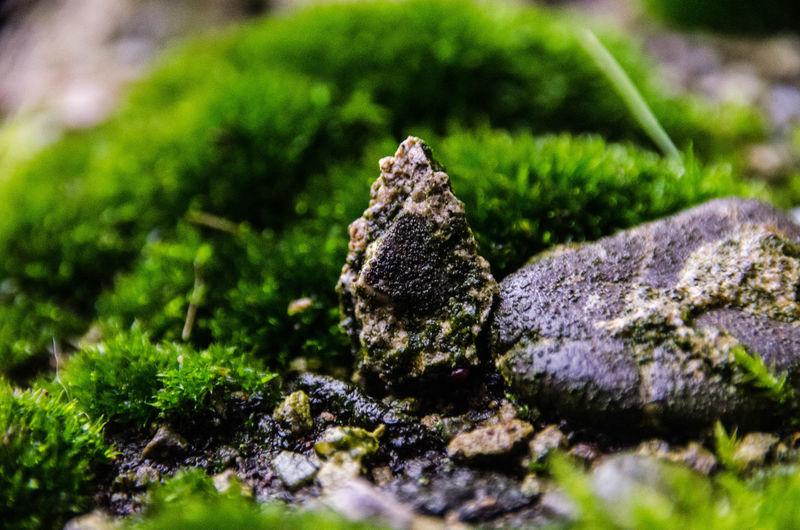 Green Rock Seed