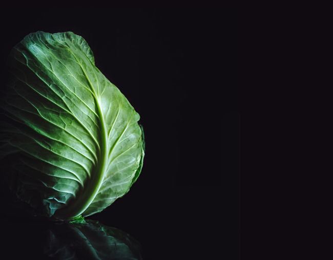 Close-up of cabbage against black background