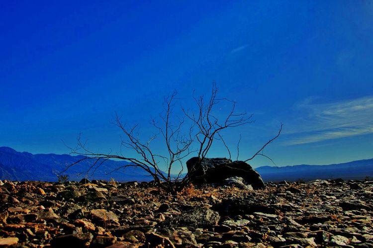Alien Landscapes @ Mojave National Preserve, CA