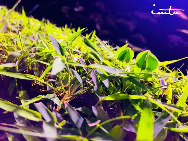 Plant Growth Green Color Plant Part Nature Leaf Close-up Beauty In Nature No People Day Outdoors Freshness Animals In The Wild Focus On Foreground Selective Focus Invertebrate Grass Land Vehicle Field Tranquility