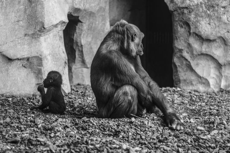 Two people sitting on rock in zoo
